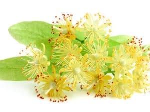 linden-blossom